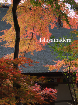 20091119-4本堂裏.JPG