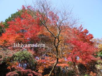 20091130-3拾翠園1.jpg