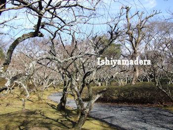 20100127-1第1梅園.jpg