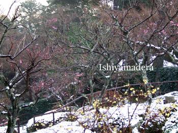 20100202-4第2梅園.jpg