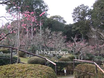 20100219-1第2梅園.jpg