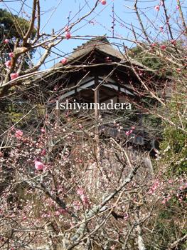 20100220-2第1梅園.jpg