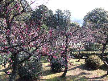 20100220-4第2梅園.jpg