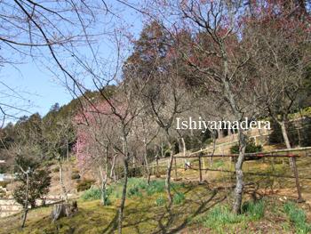 20100220-6第3梅園.jpg