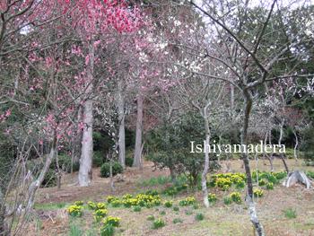 20100303-9第3梅園.jpg