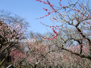 20100308-2第1梅園.jpg