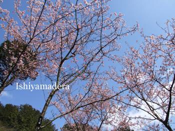 20100308-5ヒガンザクラ.jpg