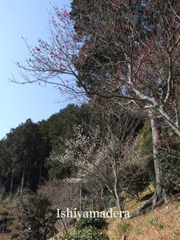20110222-6.jpg
