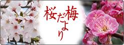 201202 梅桜だより.jpg